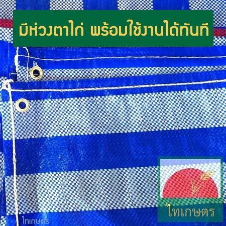 ผ้าใบพลาสติก ผ้าฟาง ผ้าเต้นท์ บลูชีท Blue Sheet สีฟ้าขาว ตราไทเกษตร (คลุมรถ ปูพื้น กันแดด กันฝน)