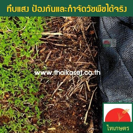 พลาสติกคลุมดินกันหญ้าขึ้น ผ้าคลุมกำจัดวัชพืช ปูพื้นสวน