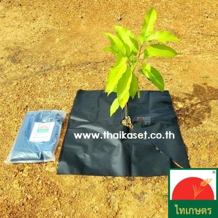 พลาสติกคลุมดินกันหญ้าขึ้น ผ้าคลุมโคนต้นไม้ กำจัดวัชพืช แบบเจาะรู
